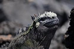 9. Galapagos